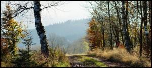Paczyn Widok Las Między Brzozami